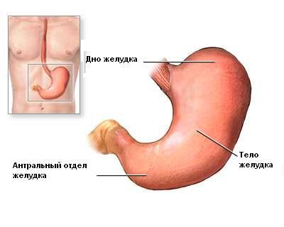 Анатомия желудка до операции - Лапароскопическая модифицированная антирефлюксная гастропластика (МАГ)
