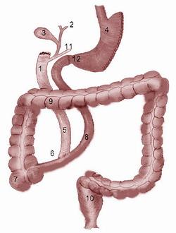 Операция Hess and Hess Билиопанкреатическое шунтирование с выключением двенадцатиперстной кишки